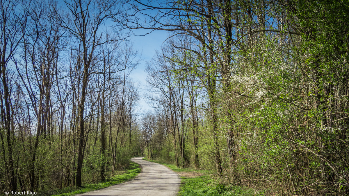 Narrow road close to Vodena Draga village. Road is surrounded with forest in bloom. Image taken 14.4.2018.