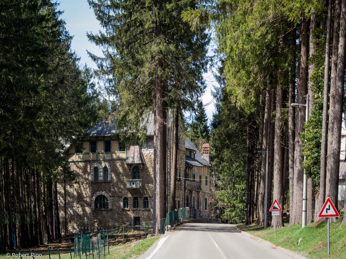 Pogled i prilazak prema dvorcu Stara Sušica. Uz cestu, s obje strane, je drvored crnogorice. Fotografirano 14.4.2018.