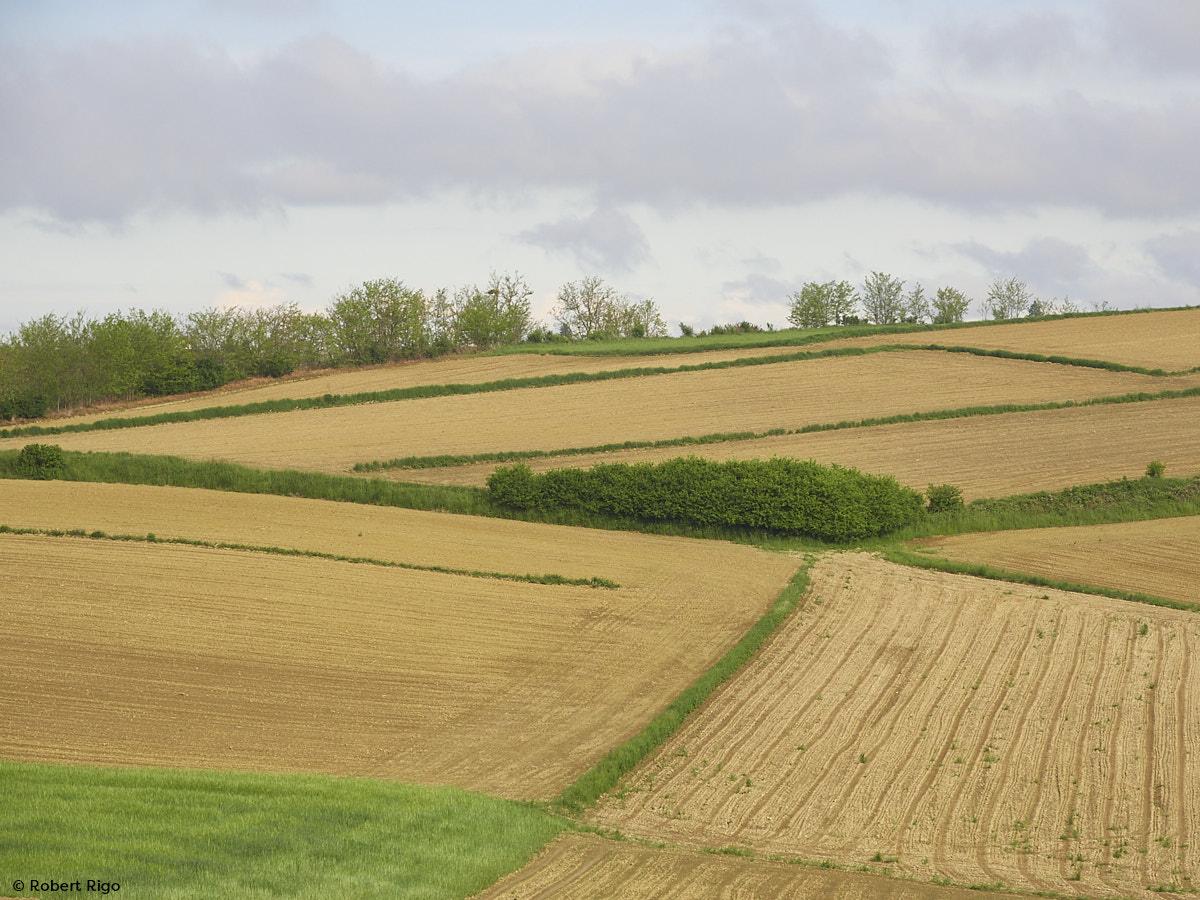 Polja su spremna (15.5.2021.)