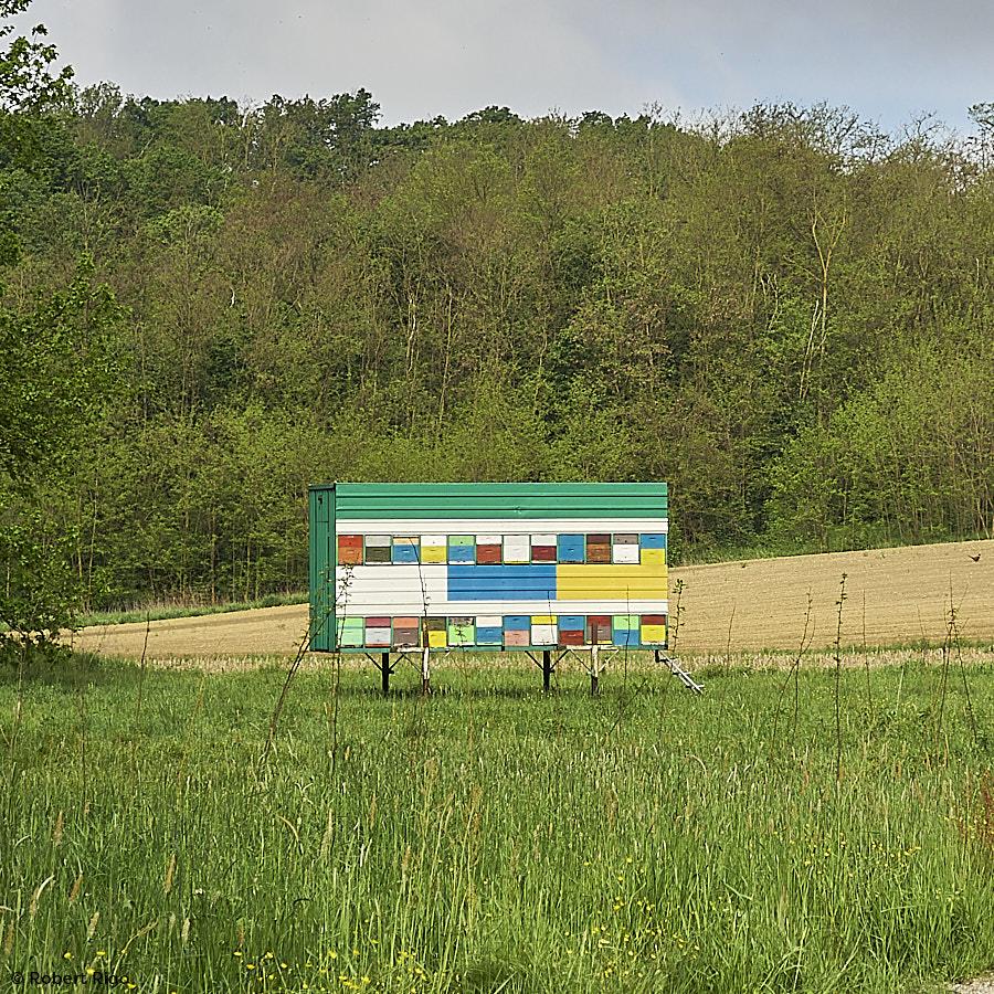 Proljeće je krenulo. Pčele su na terenu (15.5.2021.)
