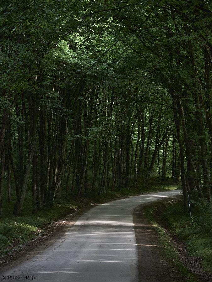Šumski tunel (15.5.2021.)
